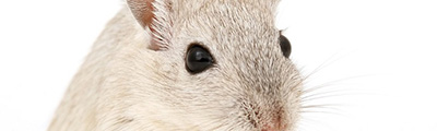 Nicotinamide riboside (NR) - A vitamin that stops the aging process of organs in mice